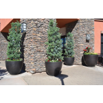 "30"" Luxe Planter Bowls at Mall - Dark Walnut"